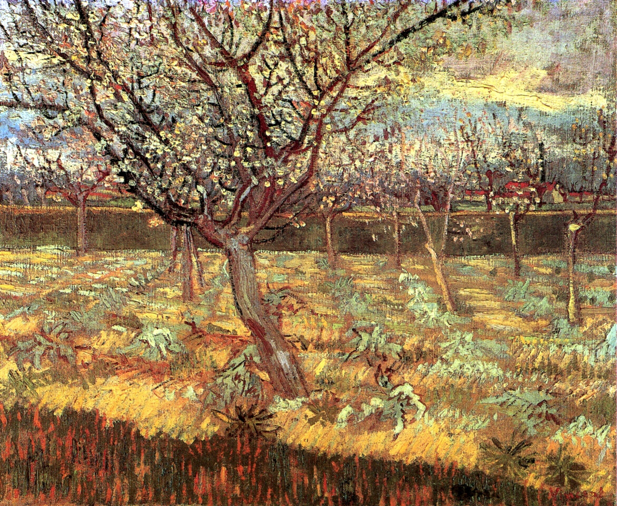 Apricot Trees In Blossom, Van Gogh,1888