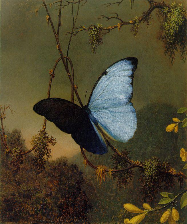 Martin Johnson Heade- Blue Morpho Butterfly